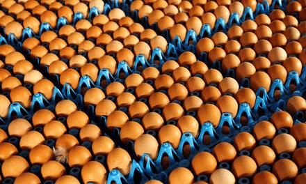 De blockchain als controlemiddel voor de voedselketen